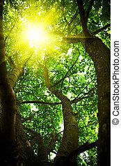 guardando attraverso, crone, albero, sole