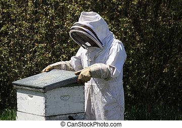 guardián, el tender, abeja de la colmena