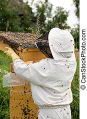 guardián, trabajo, abeja
