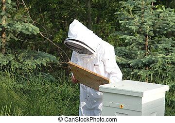 guardián, verificar, abeja de la colmena