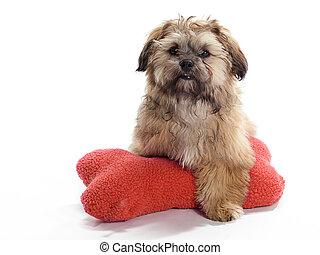 Guarding Shi Poo - A Shitzu Poodle mix Guarding a pillow