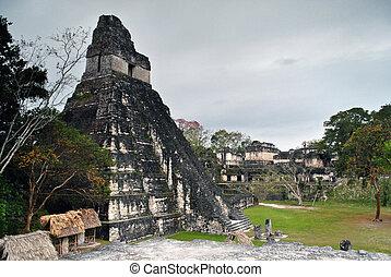 guatemala, ジャガー, 偉人, tikal, 寺院
