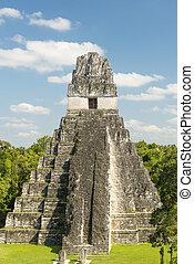 guatemala, ジャガー, 寺院, tikal