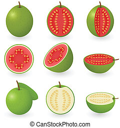 Vector illustration of guava