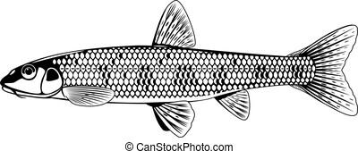 gudgeon, 白, 黒, fish