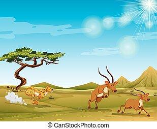 guepardo, perseguir, deers, sabana