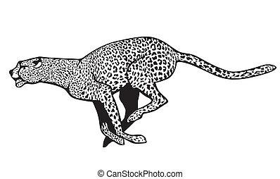 guepardo, sprinting