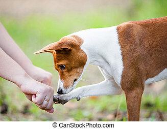 guesses, kezel, kutya, kéz, elbújik, tulajdonos