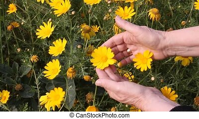 Guessing on the yellow daisy