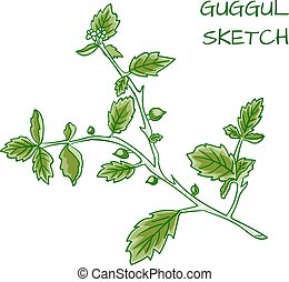 Guggul hand drawn VECTOR colorful sketch.