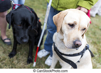 guide, chiens