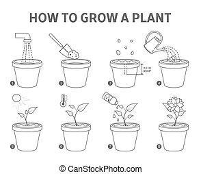 guide., crescente, pentola pianta