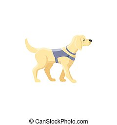 Labrador guide dog for blind people - Guide dog, specially...