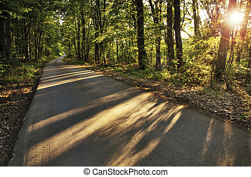 The evening sun throwing long shadows of trees on a peaceful rural road in the forest