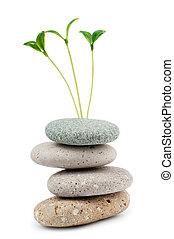 guijas, y, plantas de semilla, -, medicina alternativa, concepto