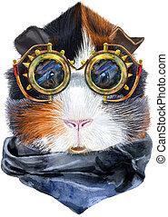 guinea, abyssinian, brille, aquarell, steampunk, hintergrund...