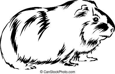 guinea, boden, sitzen, curious., schwein, schauen