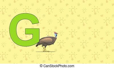 Guinea fowl. English ZOO Alphabet - letter G - Animated...