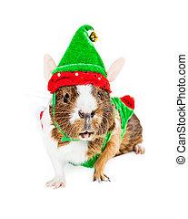 Guinea Pig Christmas Elf