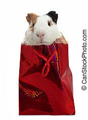 guinea pig in a gift bag over white background