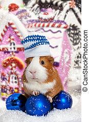guinea pig in winter hat