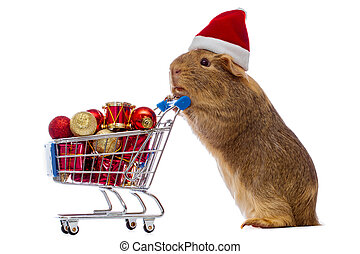 Guinea pig with christmas shopping