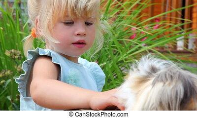 guinea, weinig; niet zo(veel), spelend, meisje, varken