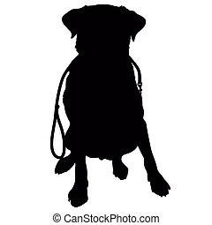 guinzaglio, silhouette, cane riporto labrador