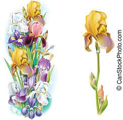 guirlandes, iris, fleurs