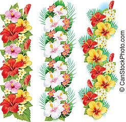 guirnalda, de, hibisco, flores