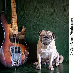 guitare, carlin, chien vert, poser, basse, fond, portrait