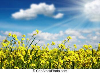 gul blommar