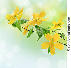 gul blomstr