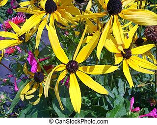 gul blomstrer