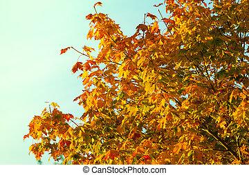 gul, efterår forlader, fald, branches
