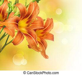 gul lilja, blomma, gräns, design