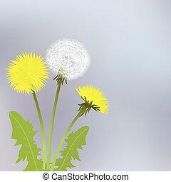 gul, maskros, blomningen