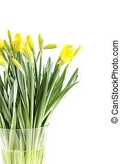 gul, påskliljor
