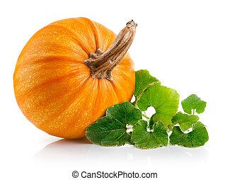 gul, pumpkin, grønsag, hos, grønnes forlader
