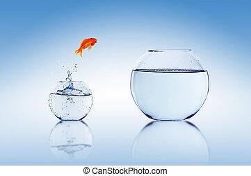 guldfisk, hopp