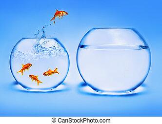 guldfisk, springe, ydre, i, den, vand