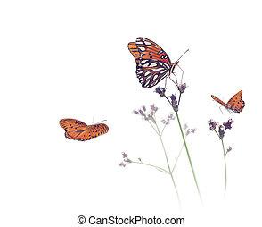 Gulf Fritillary butterflies in a meadow