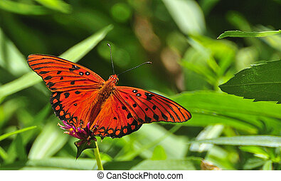 Gulf Fritillary butterfly resting on a flower stem against a green background