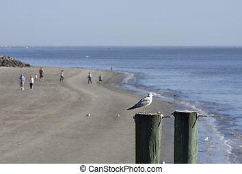 Gulf on Post People on beach