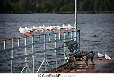 Gull and bench at a lake