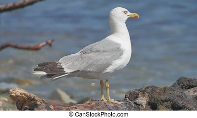 gull bird is sitting on rocks near the sea. A bird by the...