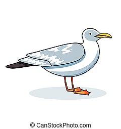 Gull flight bird and seabird gull. Sea gull, isolated on...