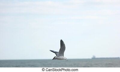 Gull flying over sea. Bird in slow motion.