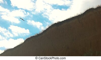 Gull flying over the cliff. Bird, sky and ground.