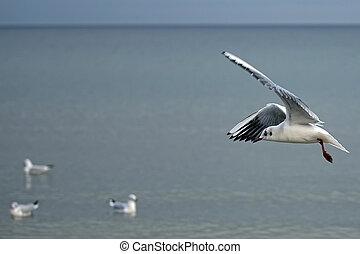 Gull in the flight near the sea